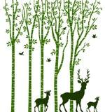 Árbol de abedul con los ciervos Foto de archivo