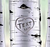 Árbol de abedul con los corazones tallados y lugar para el texto Fotografía de archivo libre de regalías