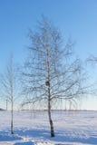 Árbol de abedul con nidal en un campo nevoso Foto de archivo libre de regalías