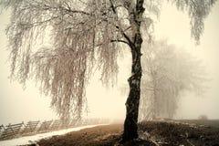 Árbol de abedul congelado fotos de archivo