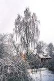 Árbol de abedul congelado hermoso cerca de casas tradicionales suecas Imagen de archivo libre de regalías