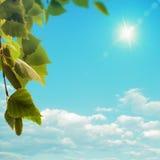 Árbol de abedul debajo del sol brillante del verano Imagenes de archivo