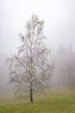 Árbol de abedul del otoño Foto de archivo libre de regalías