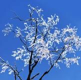 Árbol de abedul desnudo con los cristales de hielo Imagen de archivo