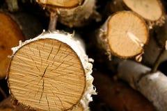 Árbol de abedul dividido en segmentos, fondo Fotografía de archivo libre de regalías