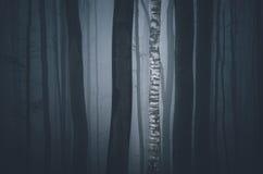 Árbol de abedul en bosque oscuro Fotografía de archivo