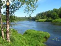 Árbol de abedul en el banco del río en día soleado de la última mañana del verano Fotos de archivo libres de regalías