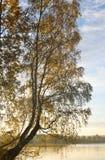 Árbol de abedul en el lago en la salida del sol Imagenes de archivo