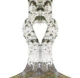 Árbol de abedul en la forma del corazón Fotos de archivo libres de regalías