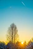 Árbol de abedul en la puesta del sol Foto de archivo