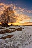 Árbol de abedul en la puesta del sol Imagen de archivo