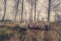 Árbol de abedul en la tierra Fotos de archivo libres de regalías