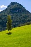 Árbol de abedul en las montañas Foto de archivo libre de regalías