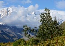 Árbol de abedul en las montañas del Cáucaso, Svaneti superior, Georgia Imagenes de archivo