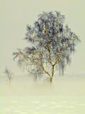 Árbol de abedul en niebla Fotos de archivo libres de regalías