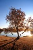 Árbol de abedul en orilla del lago en el otoño Foto de archivo libre de regalías