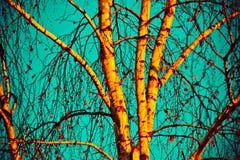 Árbol de abedul en otoño Fotografía de archivo