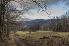 Árbol de abedul en prado cerca de la trayectoria a las montañas de Jizerske Fotografía de archivo libre de regalías
