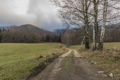 Árbol de abedul en prado cerca de la trayectoria a las montañas de Jizerske Imagen de archivo