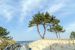 Árbol de abedul en Usedom cerca de un pequeño Fotos de archivo