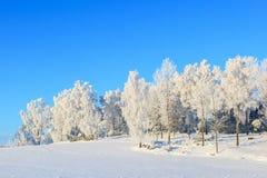 Árbol de abedul escarchado en paisaje del invierno Fotografía de archivo