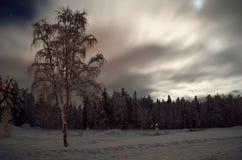 Árbol de abedul hermoso en campo del invierno con la Luna Llena y el bosque Imágenes de archivo libres de regalías