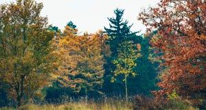 Árbol de abedul joven con las hojas de otoño amarillas en campo Imagen de archivo libre de regalías
