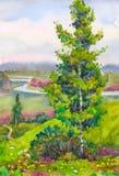 Árbol de abedul joven en la colina Imágenes de archivo libres de regalías