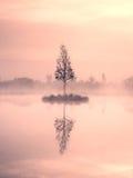 Árbol de abedul joven en la isla en el centro del lago del pantano Mañana púrpura con agua pacífica Imagen de archivo libre de regalías