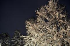 Árbol de abedul Nevado en invierno Fotos de archivo