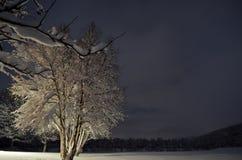Árbol de abedul Nevado en invierno Foto de archivo libre de regalías