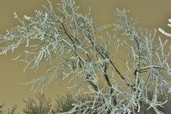 Árbol de abedul Nevado en noche del invierno Paisaje de la noche Imagenes de archivo