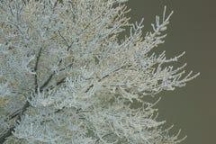 Árbol de abedul Nevado en noche del invierno Paisaje de la noche Imágenes de archivo libres de regalías