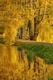 Árbol de abedul de oro del otoño Fotografía de archivo libre de regalías