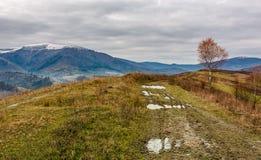 Árbol de abedul por el camino de tierra en la colina Imagenes de archivo