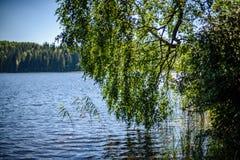 árbol de abedul por el lago Foto de archivo libre de regalías