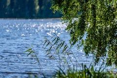 árbol de abedul por el lago Foto de archivo