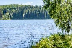 árbol de abedul por el lago Imagen de archivo libre de regalías