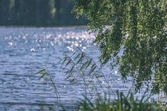 árbol de abedul por el lago - efecto de la película del vintage Fotografía de archivo libre de regalías
