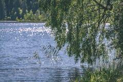 árbol de abedul por el lago - efecto de la película del vintage Foto de archivo libre de regalías
