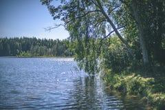 árbol de abedul por el lago - efecto de la película del vintage Imagenes de archivo
