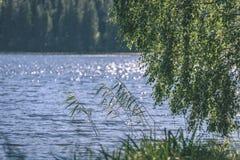 árbol de abedul por el lago - efecto de la película del vintage Fotos de archivo