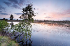 Árbol de abedul por el río en la salida del sol Fotografía de archivo