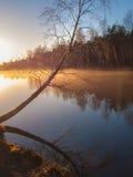 Árbol de abedul por un lago brumoso Imagen de archivo libre de regalías