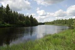 Árbol de abedul que crece cerca del río Fotos de archivo libres de regalías
