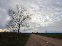 Árbol de abedul, rad y cielo nublado Imagen de archivo libre de regalías
