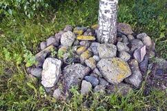 Árbol de abedul rodeado por las piedras Imágenes de archivo libres de regalías