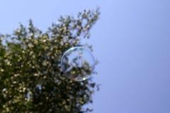 Árbol de abedul ruso y una burbuja de jabón Imágenes de archivo libres de regalías