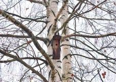 Árbol de abedul sin las hojas Fotografía de archivo libre de regalías