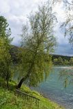 Árbol de abedul sobre el río Fotografía de archivo libre de regalías